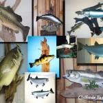 New York Fish Taxidermist, Great Lakes Taxidermist