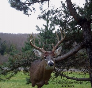 Oneonta, Cooperstown, Edmeston, Morris, Cherry Valley,West Laurens, Otego, Gilberstville, West Winfield NY Taxidermist