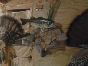 NY Largemouth Bass Taxidermy