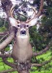 Western NY Buck Kill