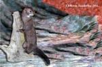 Standing Wild Mink