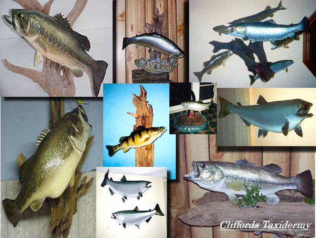 New York Fish Taxidermy