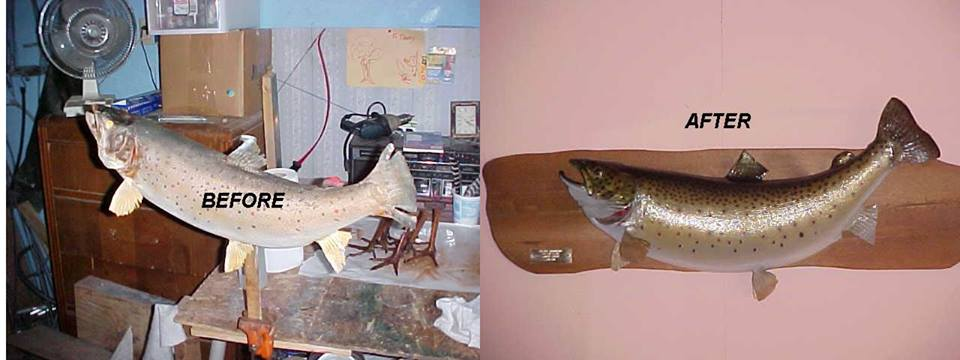 Fish Mount Repair