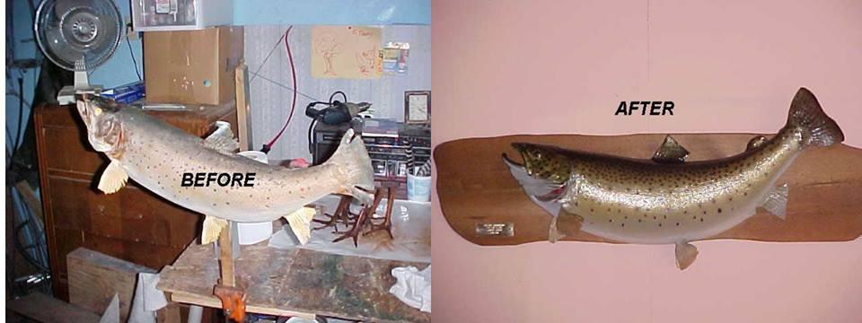 Fish Mount Repair