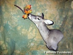 Whitetail Doe Taxidermy
