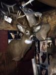 Jakes Deer