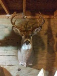 2015 Richfield Springs Buck